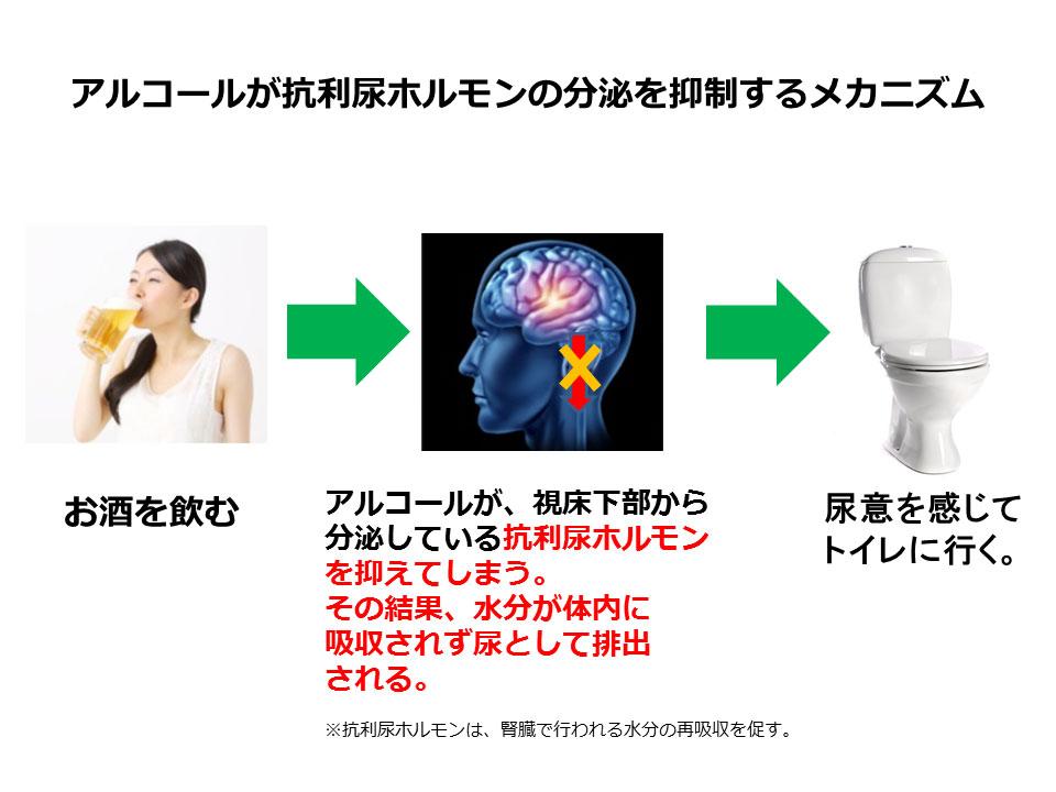 アルコールが抗利尿ホルモンの分泌を抑制するメカニズム(圧縮)