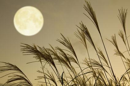 秋ススキと満月